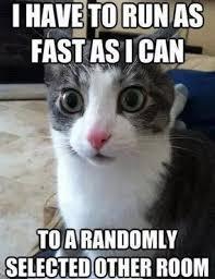 Run fast cats