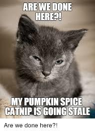 Pumpkin Spice Cat